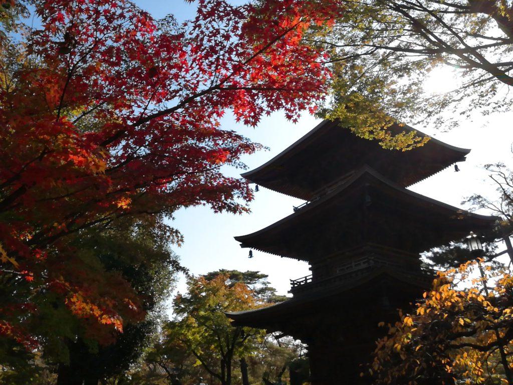 豪徳寺の見どころ③ 三重塔