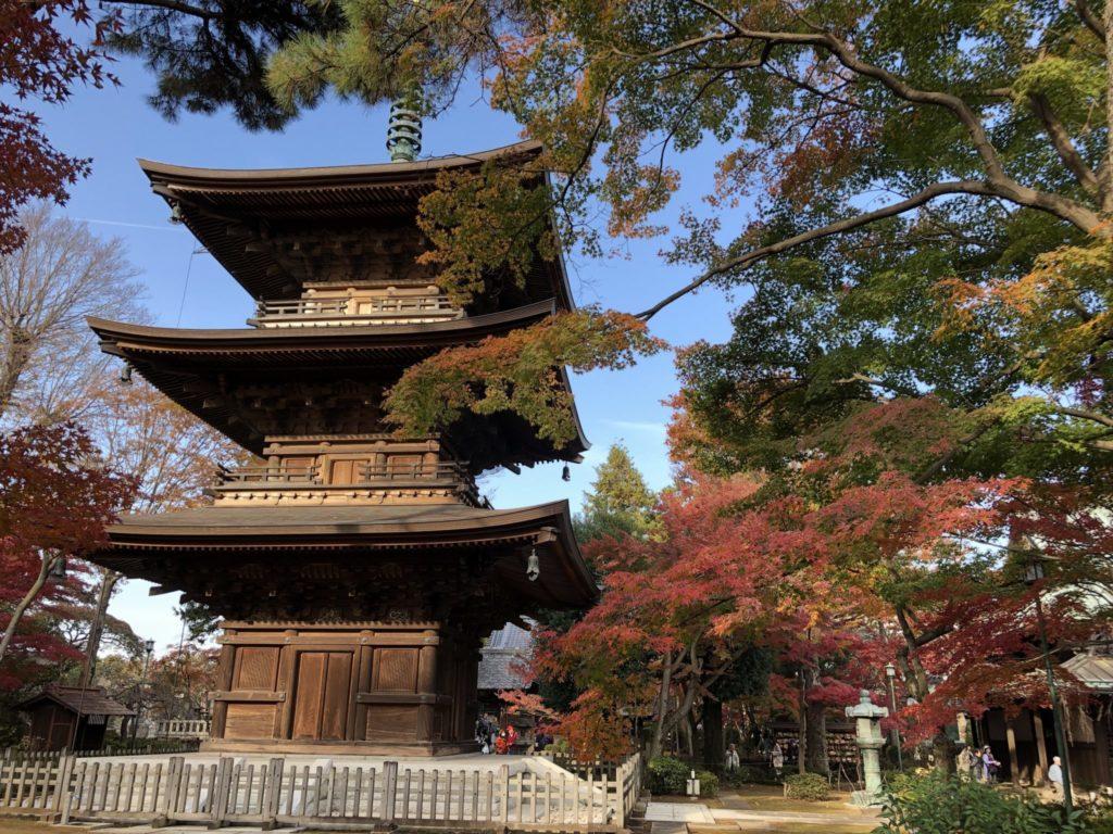 豪徳寺(豪徳寺・山下)の三重塔