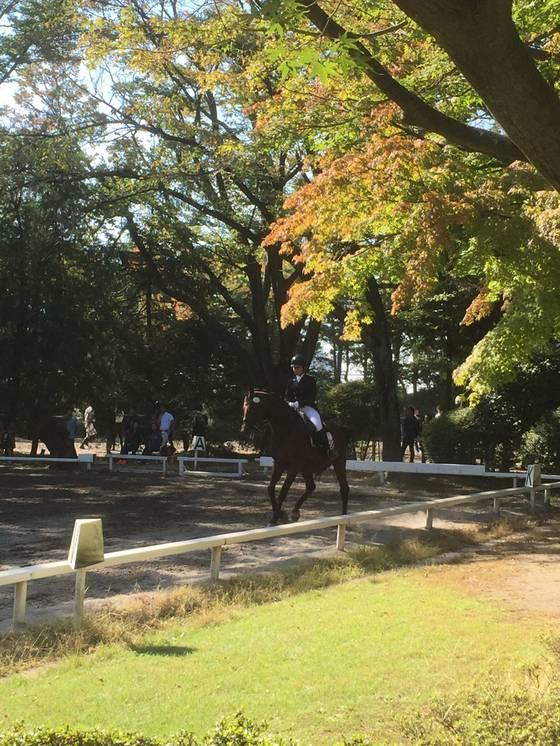 馬事公苑の馬