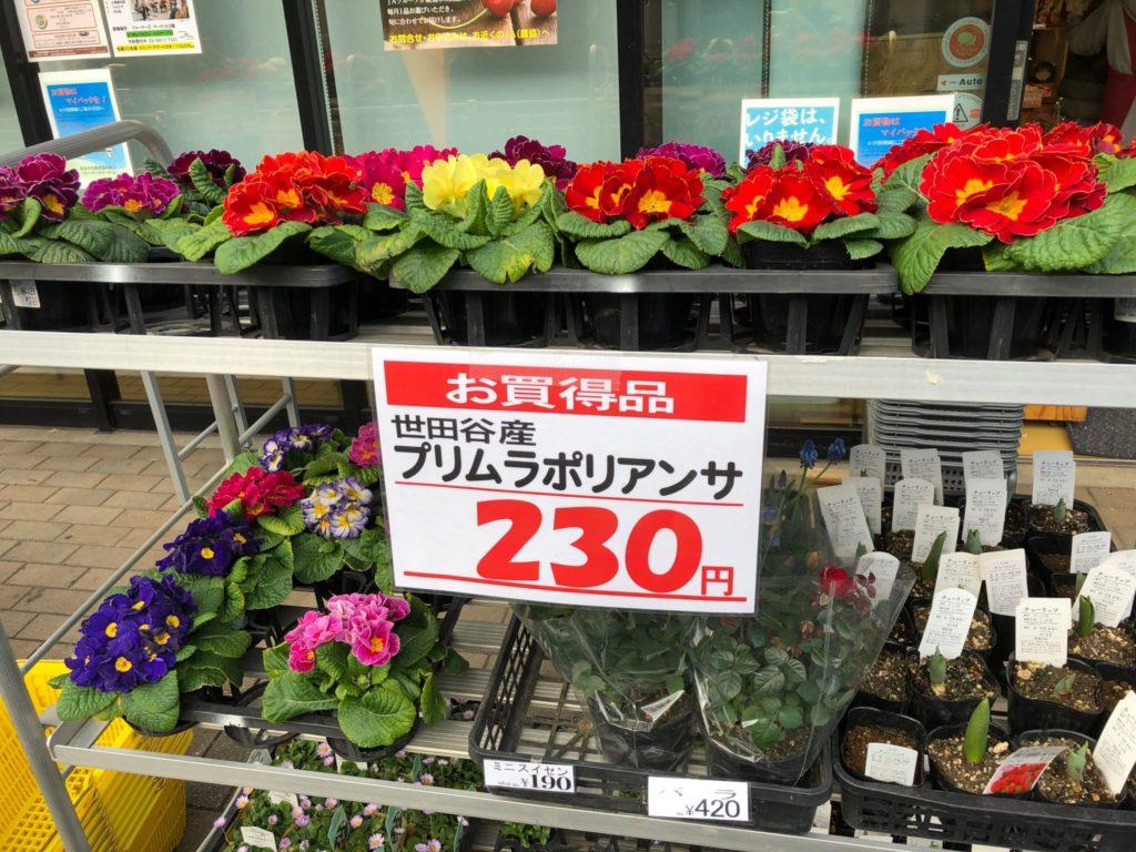 ファーマーズマーケット二子玉川で買える花や苗