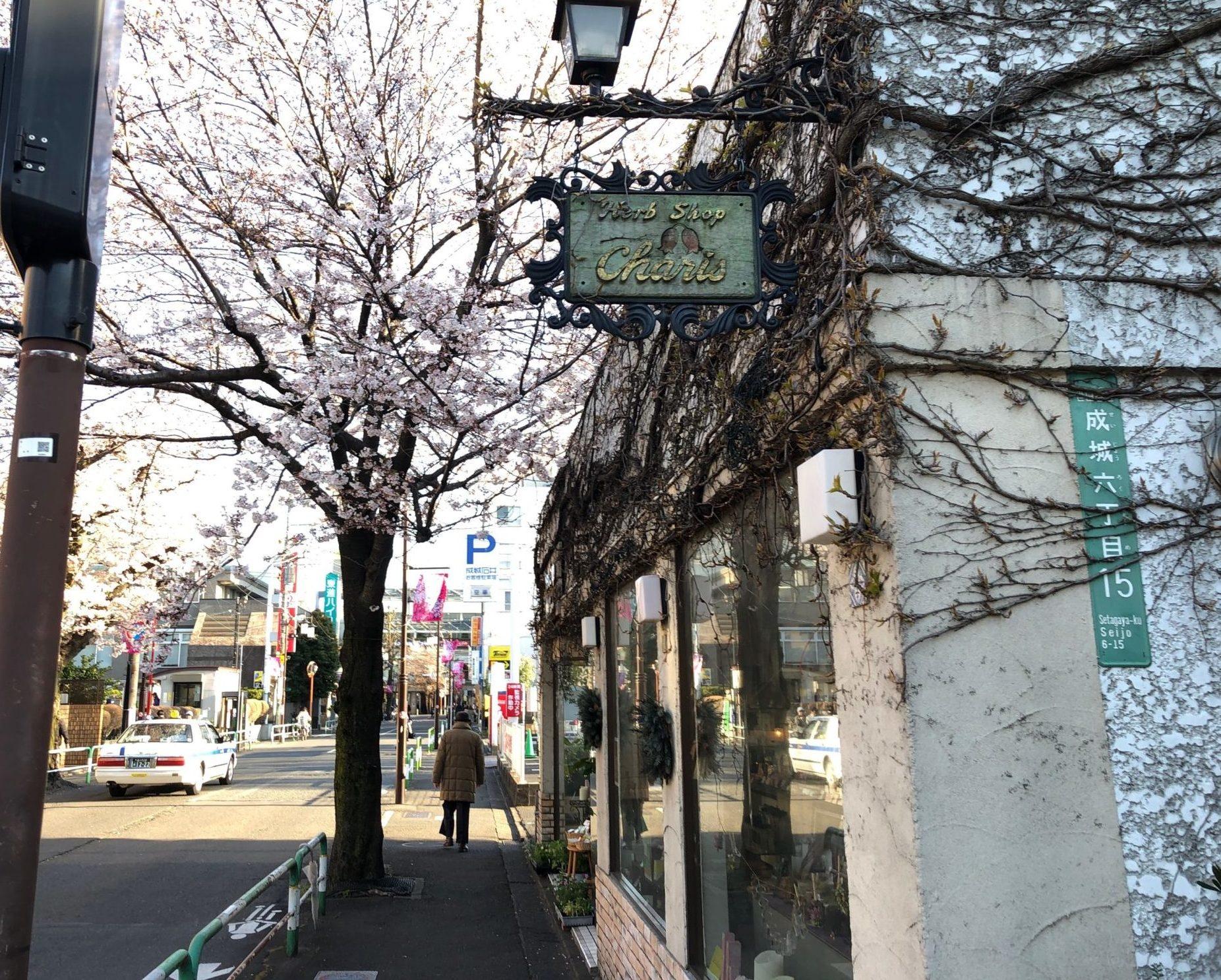 カリス成城は成城通り沿い