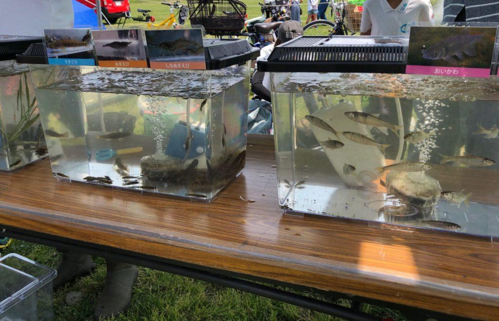 宇奈根の渡しのミニ水族館