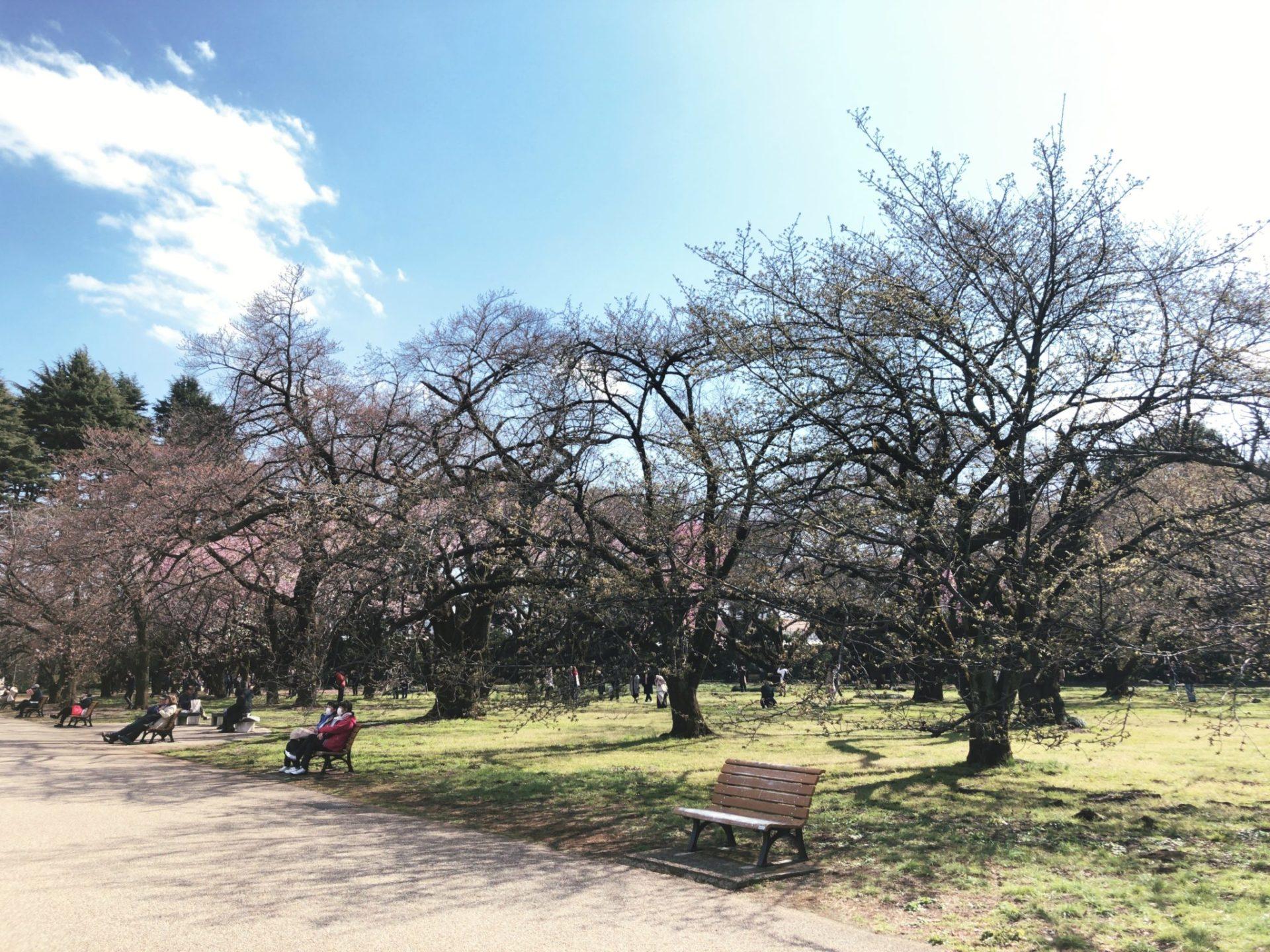 【新宿御苑】お花見の桜園地にはベンチあり