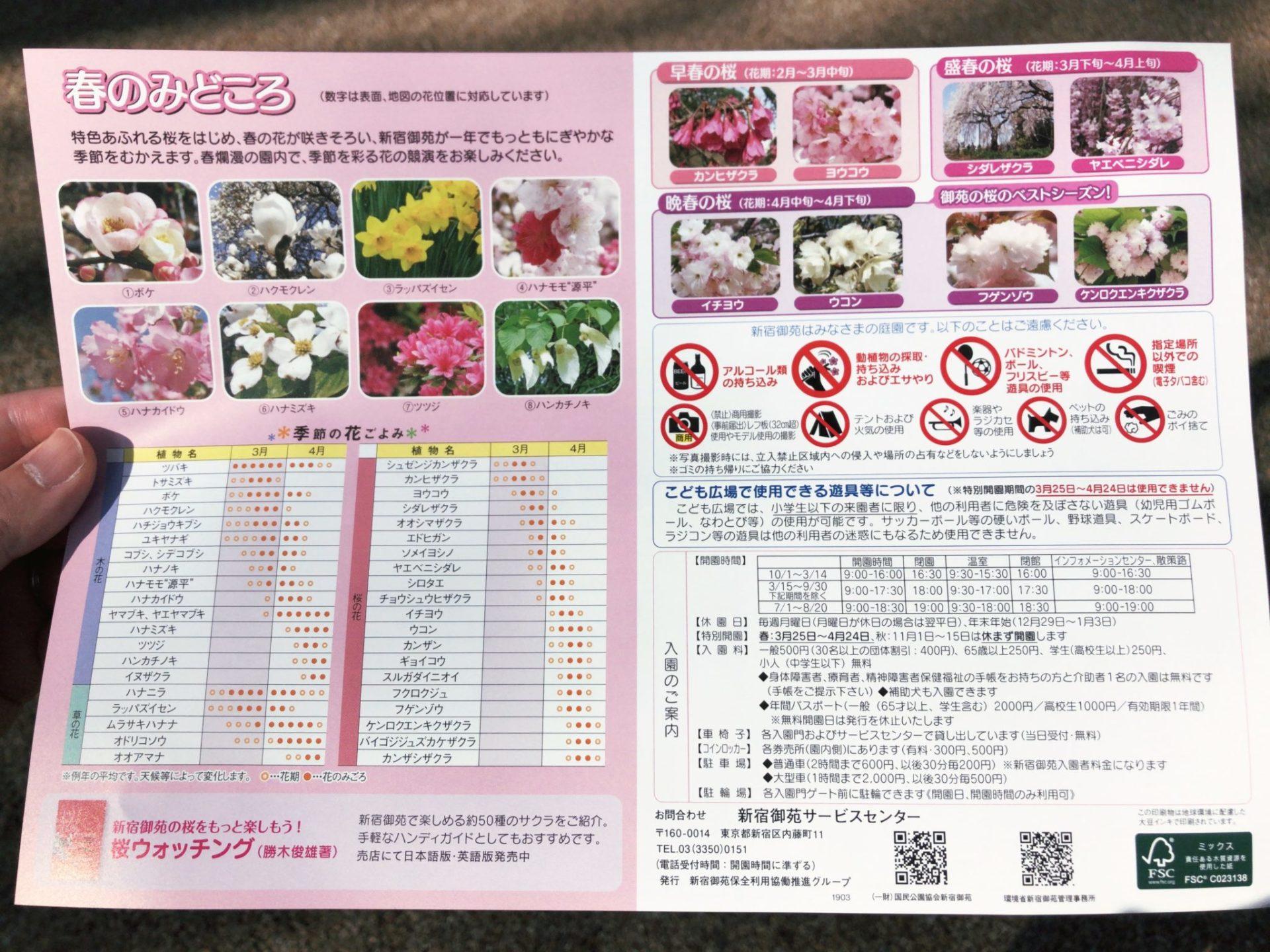 【新宿御苑】お花見の春の見どころ