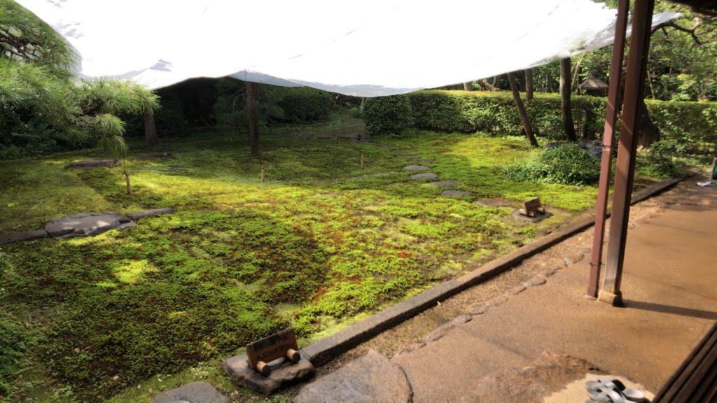 猪俣庭園のスギゴケ
