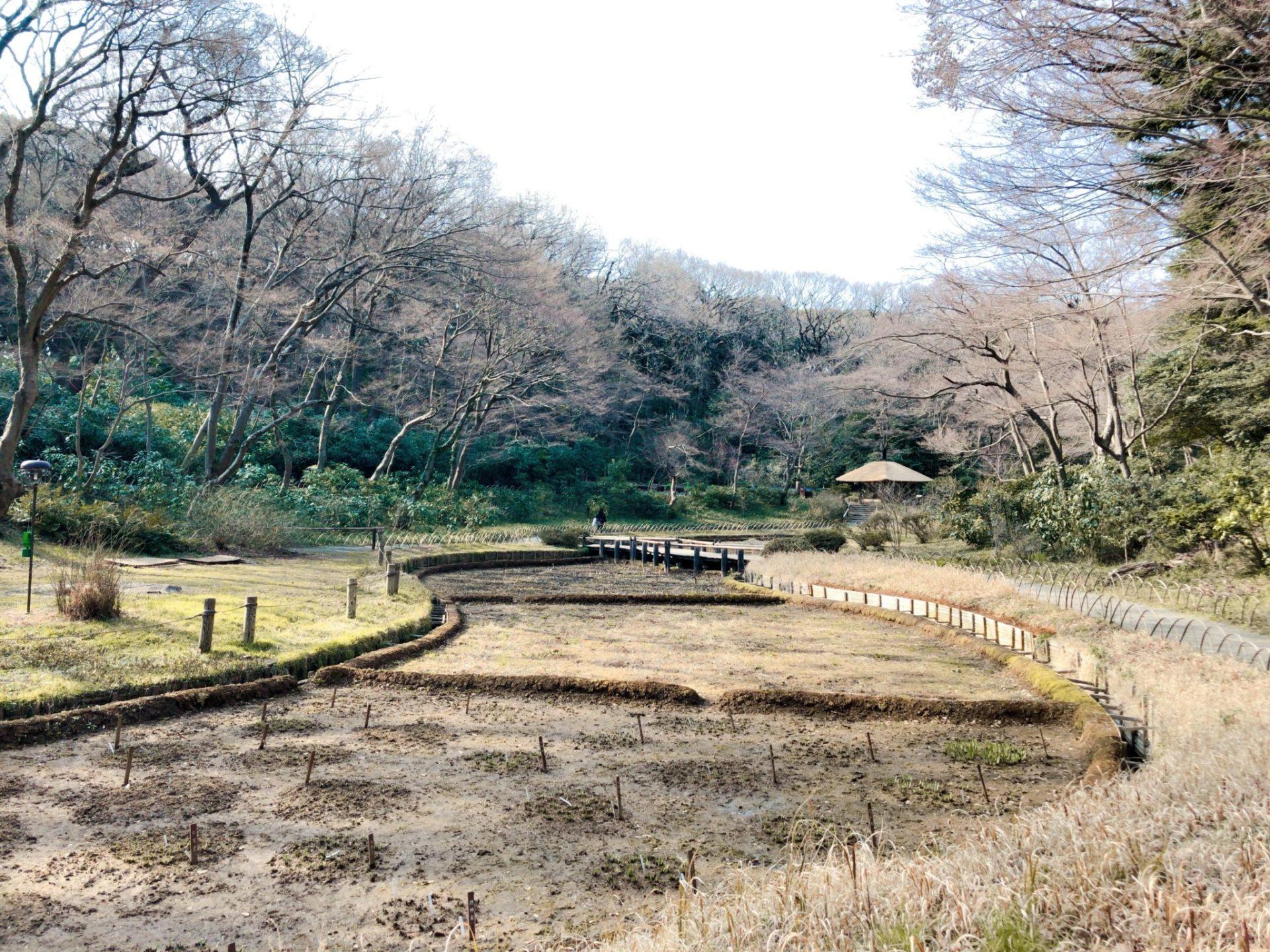 明治神宮御苑の菖蒲園(3月撮影)