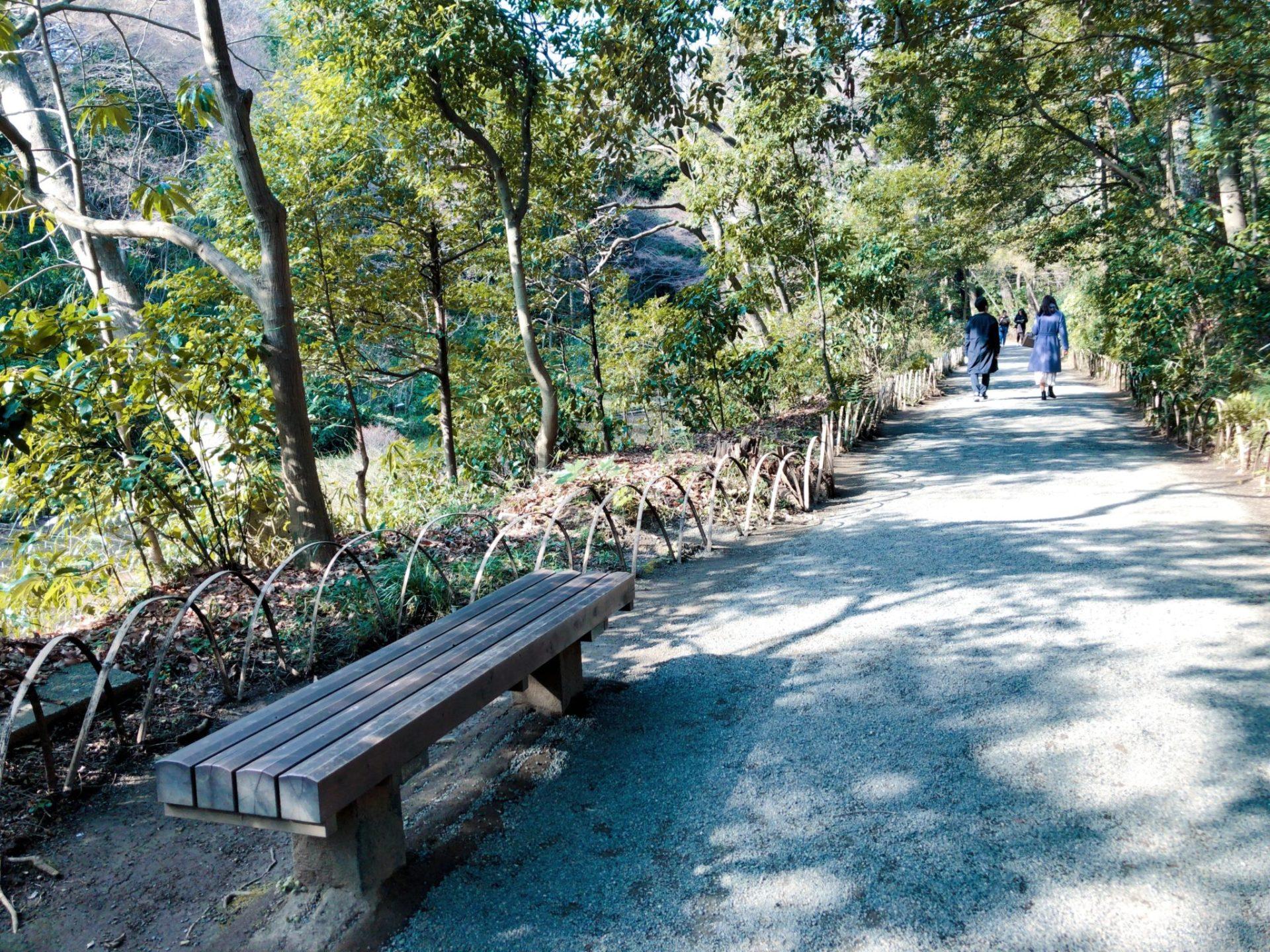 明治神宮御苑の森