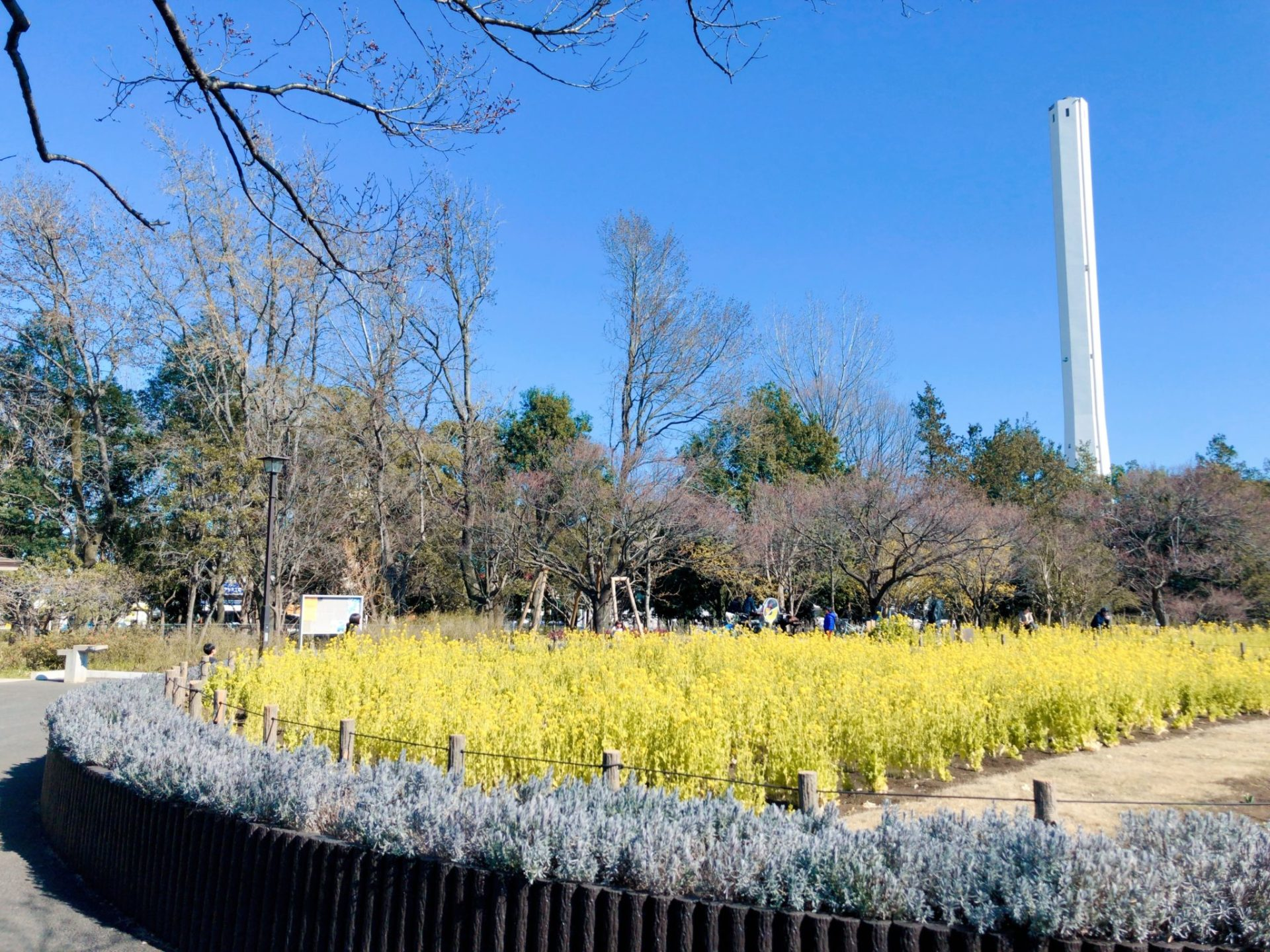 芦花公園(蘆花恒春園)の菜の花