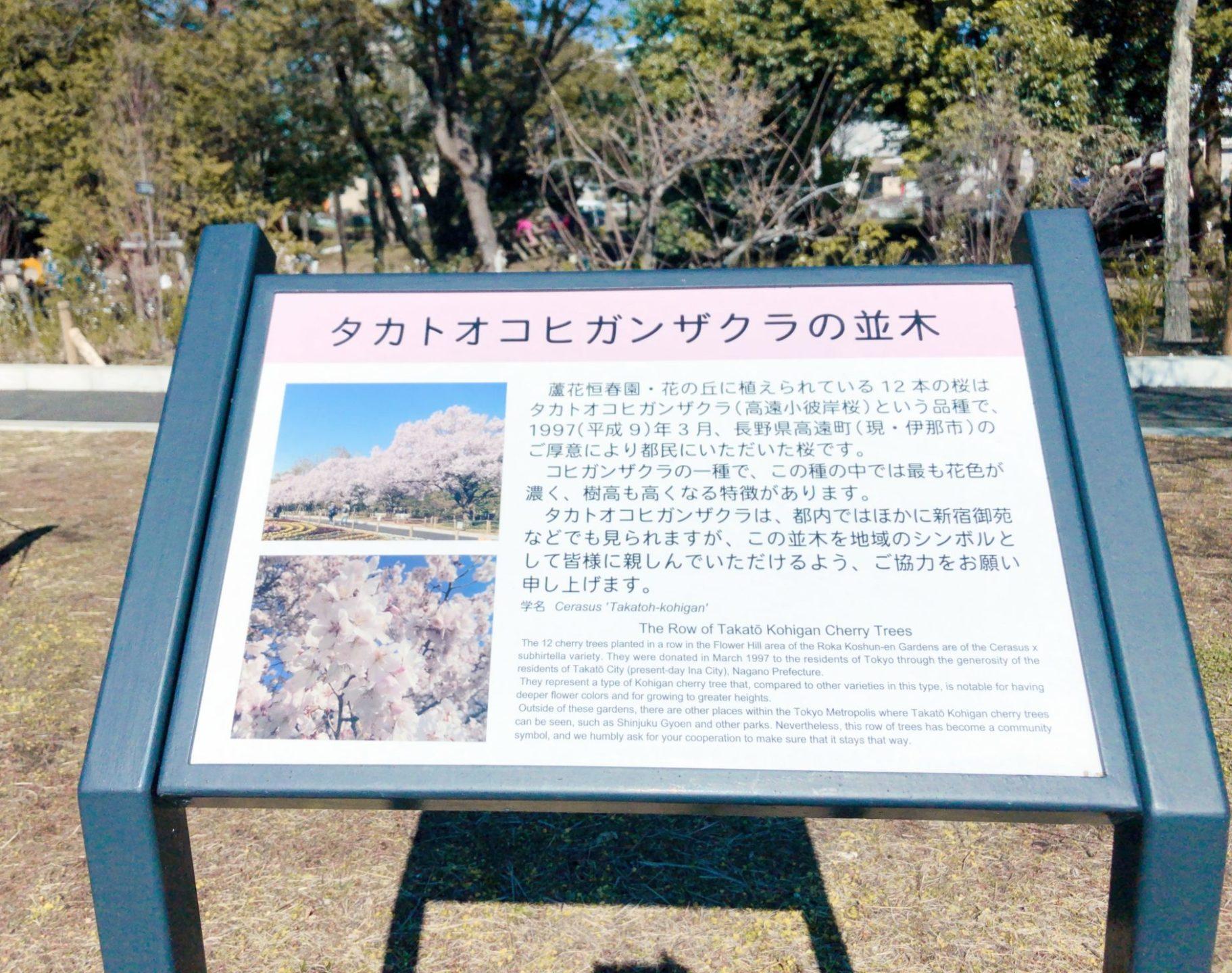 芦花公園(蘆花恒春園)のタカトオコヒガンザクラ