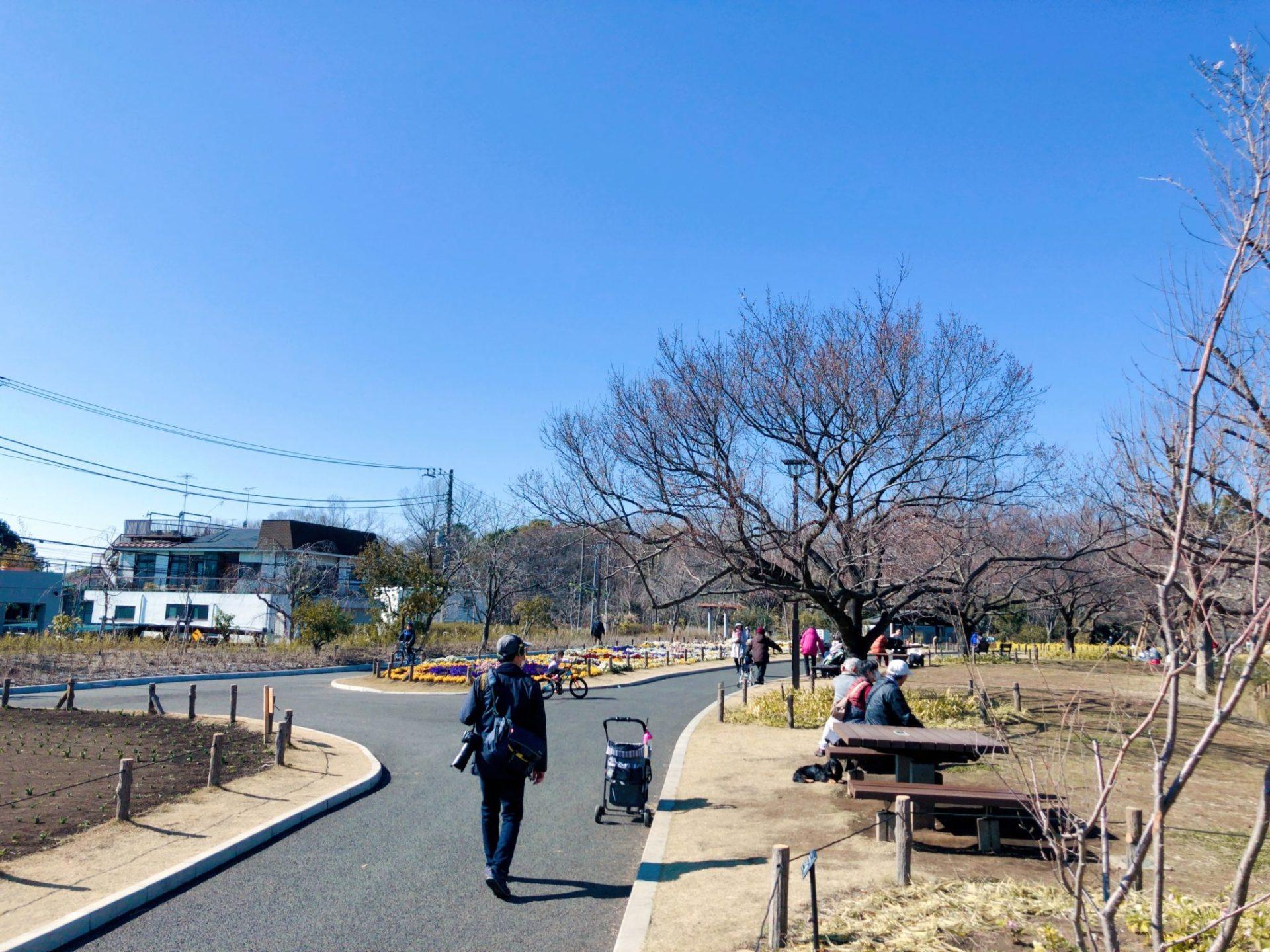 芦花公園(蘆花恒春園)の花の丘