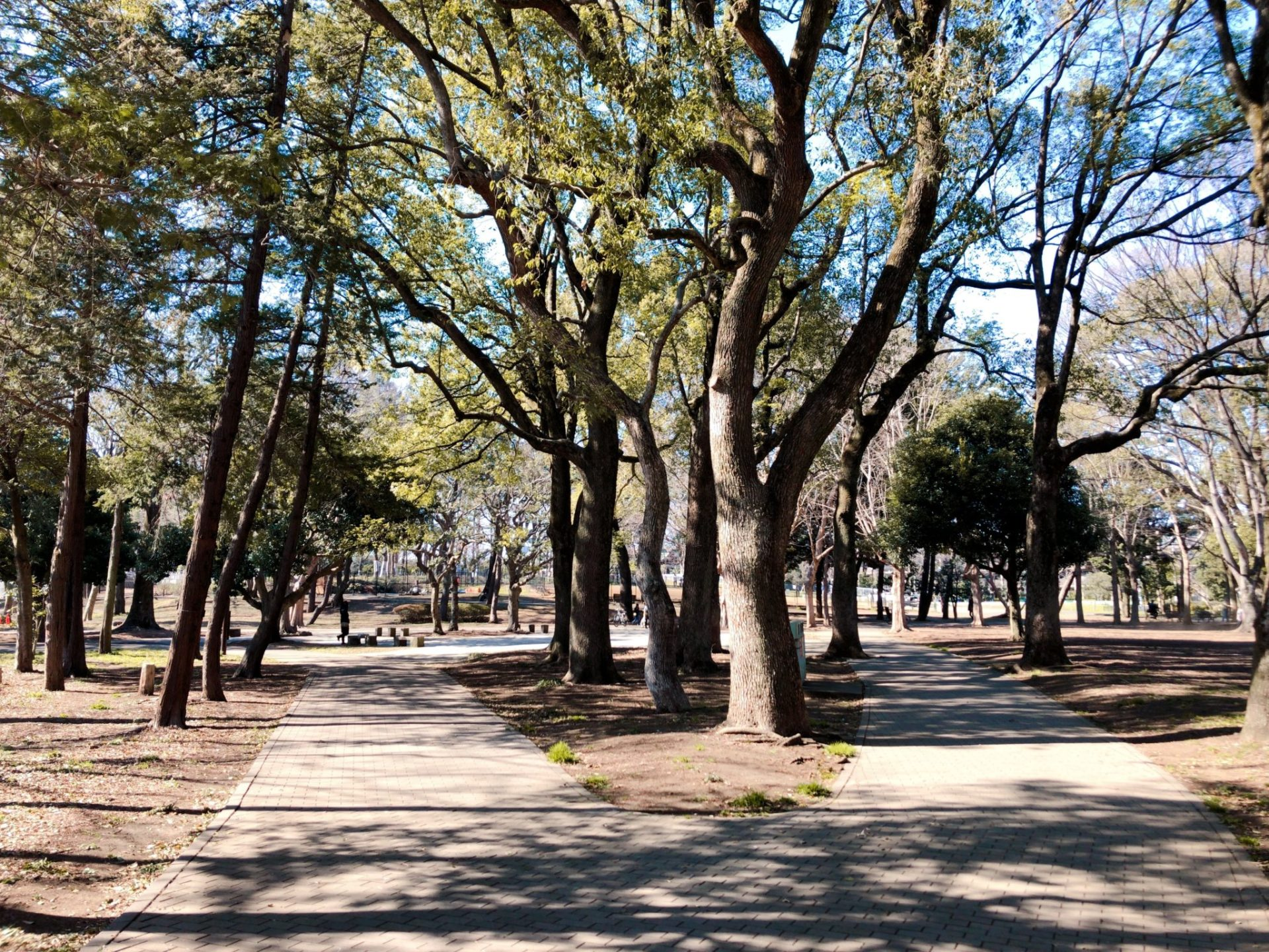 芦花公園(蘆花恒春園)のジョギングコース