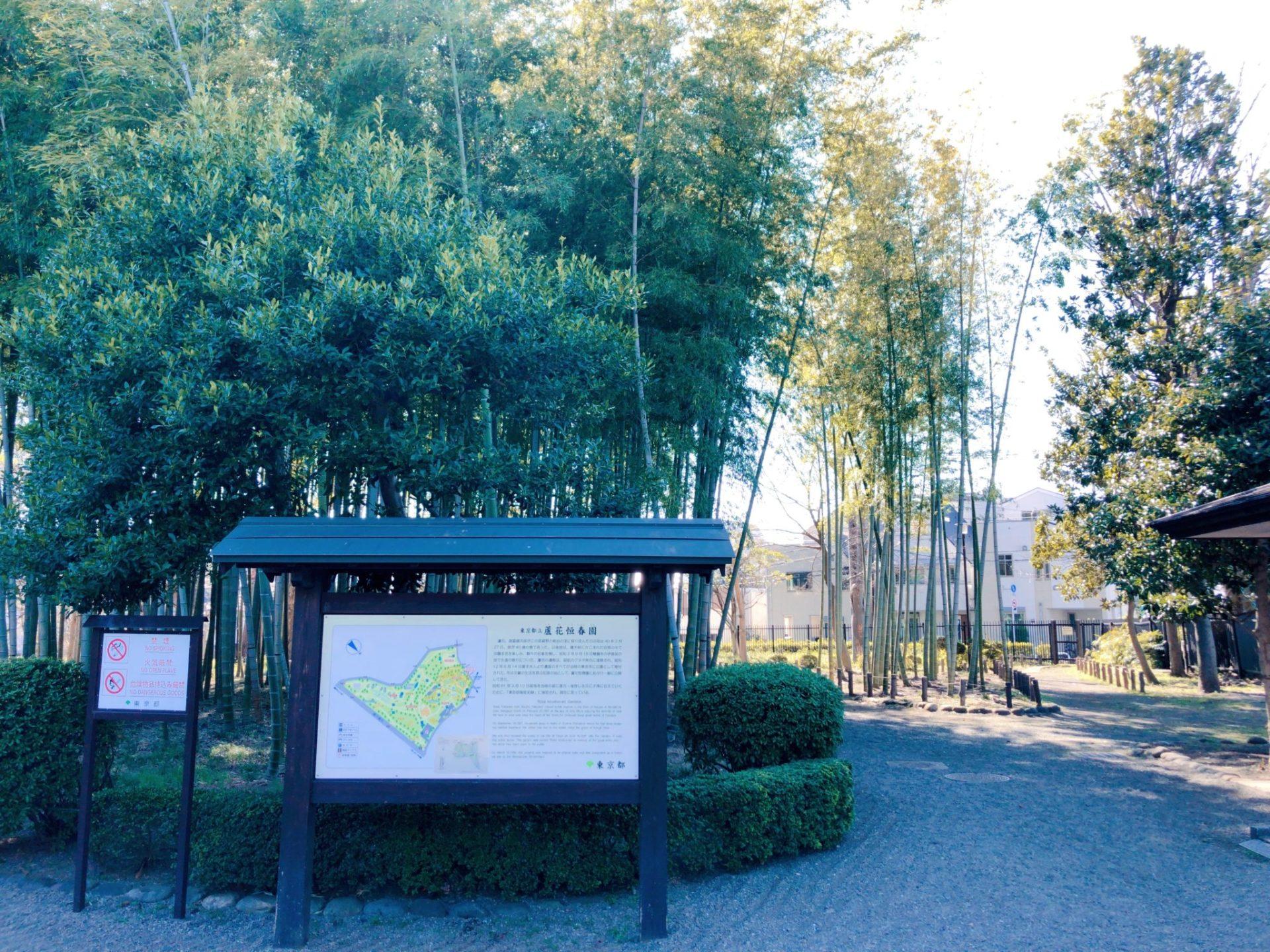 せたがや百景にも選ばれている芦花公園の竹林