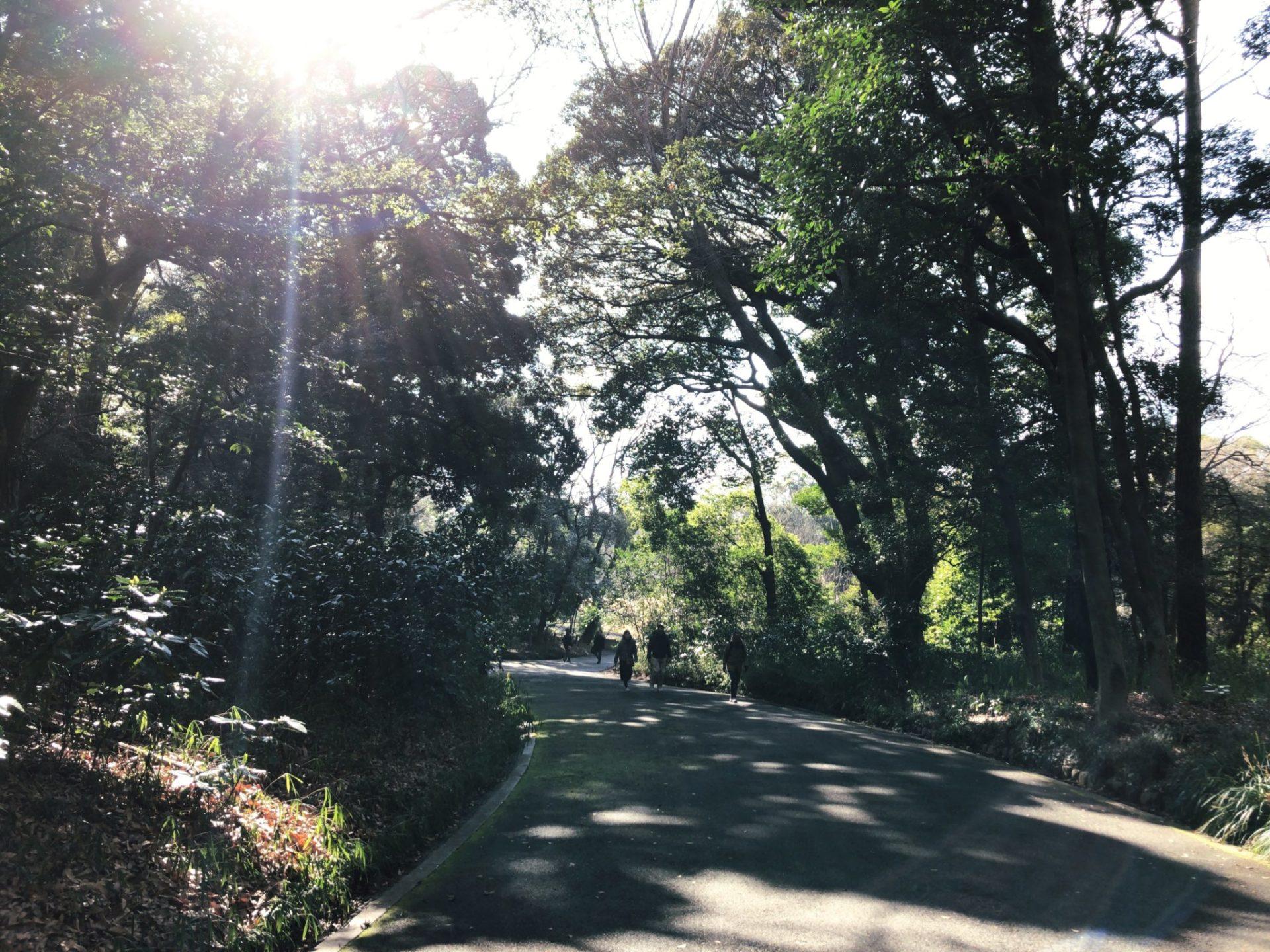 明治神宮の芝生広場に向かう道