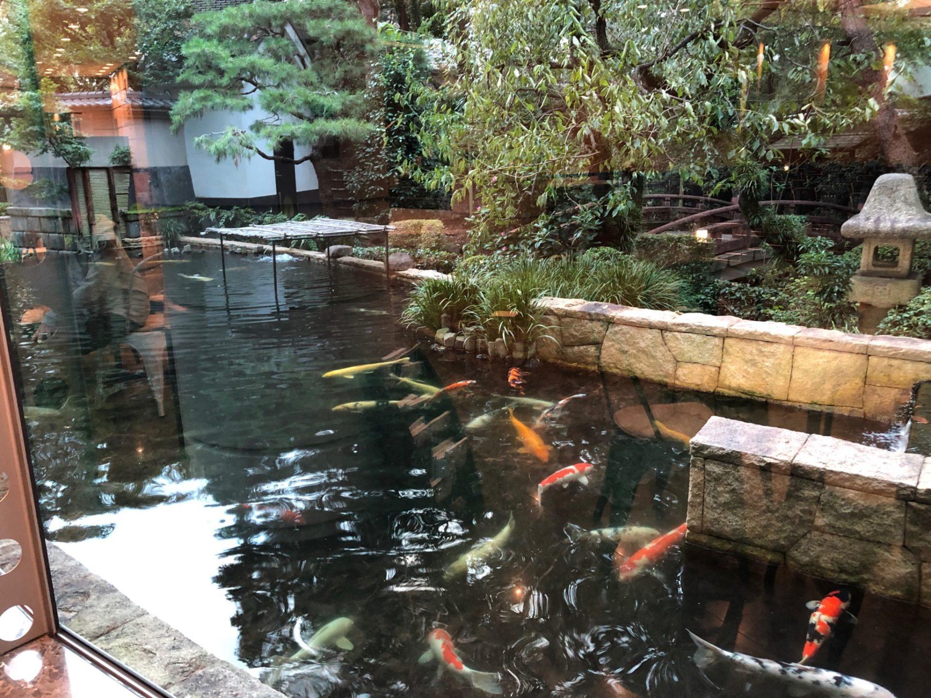 世田谷文学館 芦花公園の日本庭園の鯉