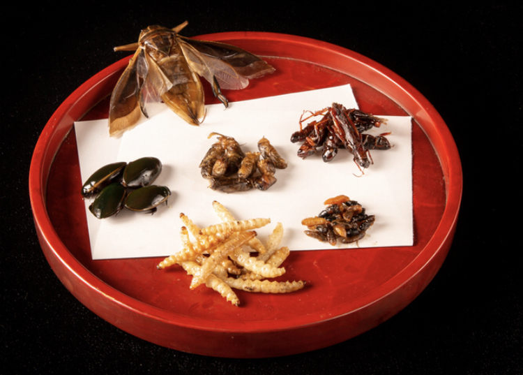 米とサーカスのデリバリー 昆虫6種盛り合わせ